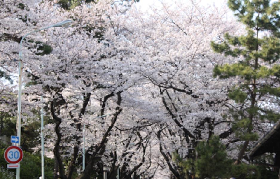 Twitterでお花見をもっと楽しく #桜2012